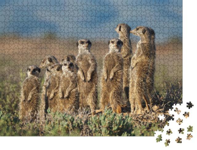 """Puzzle 1000 Teile """"Erdmännchen-Familie in Südafrika"""""""