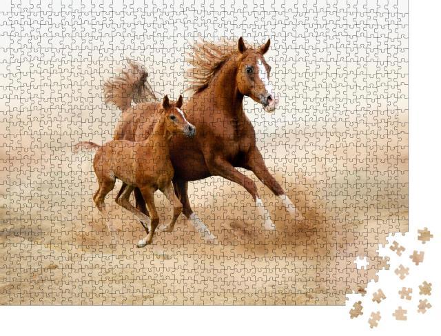 """Puzzle 1000 Teile """"Reinrassiges weißes arabisches Pferd"""""""