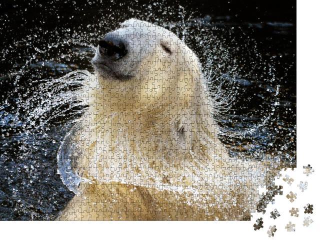 """Puzzle 1000 Teile """" Porträt eines Eisbären, der für eine Shampoo-Werbung vorzusprechen scheint"""""""