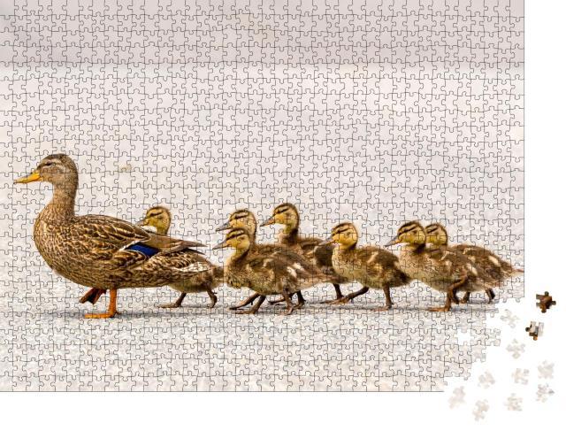 """Puzzle 1000 Teile """"Eine Entenmutter und ihre Entenküken überqueren in einer Reihe eine Straße"""""""