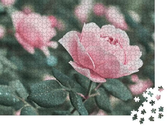 """Puzzle 1000 Teile """"Rose Blume aus der Natur"""""""