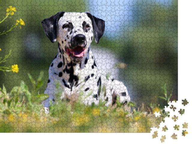 """Puzzle 1000 Teile """"Dalmatiner: sommerliches Bild des Hundes"""""""