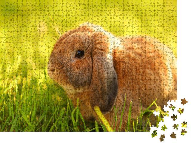 """Puzzle 1000 Teile """"Kleines Kaninchen mit Hängeohren sitzt auf dem Rasen"""""""