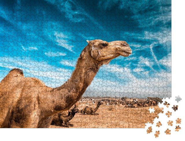 "Puzzle 1000 Teile ""Kamel auf der Pushkar Mela"""