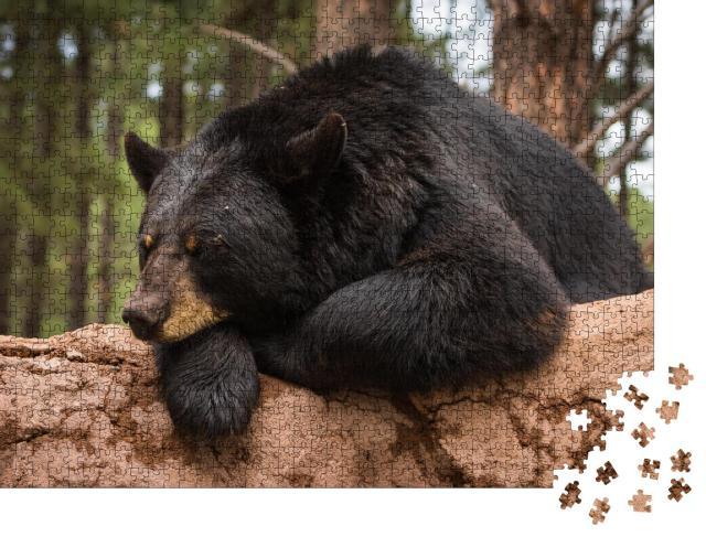 """Puzzle 1000 Teile """"Fauler Bär auf einem Baumstamm"""""""