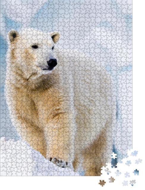 """Puzzle 1000 Teile """"Junger Eisbär auf dem Eisblock stehend"""""""