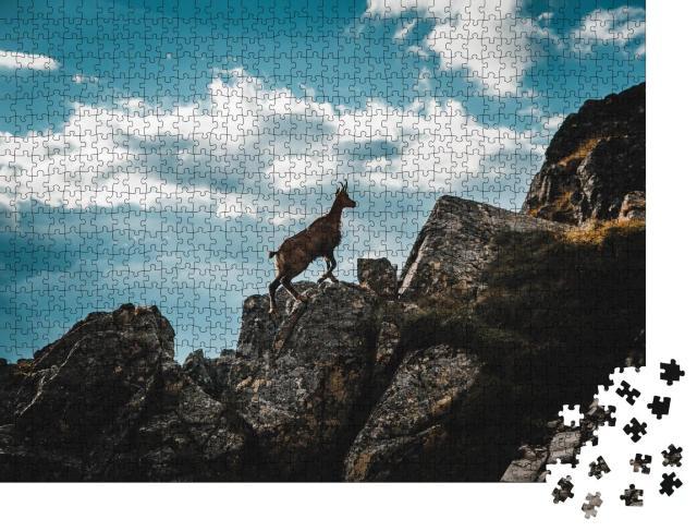 """Puzzle 1000 Teile """"Junge Gämse in den italienischen Alpen"""""""