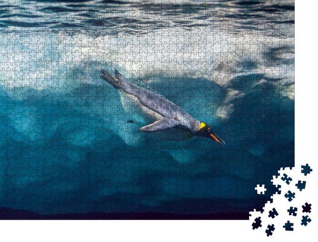 """Puzzle 1000 Teile """"Pinguin taucht unter dem Eis, Unterwasserfoto"""""""