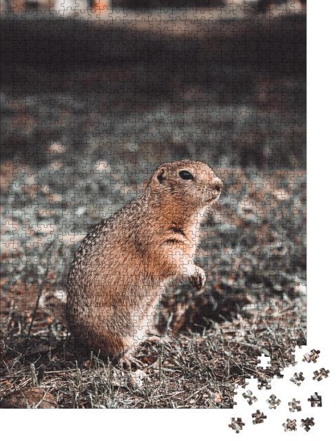 """Puzzle 1000 Teile """"Waldtier: Taschenratte frisst in ihrem Loch auf einer Lichtung, Herbst"""""""