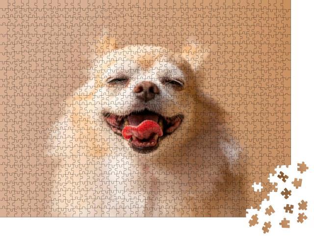 """Puzzle 1000 Teile """"Brauner Chihuahua: Schoßhund"""""""