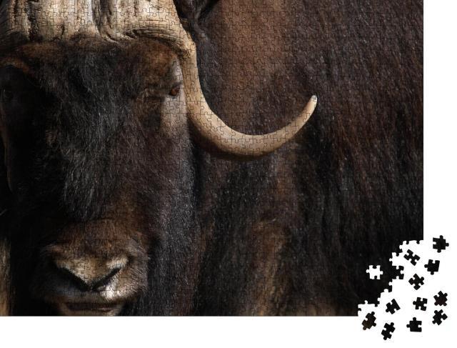 """Puzzle 1000 Teile """"Porträt eines alten Moschusochsen mit langem Horn und Fell"""""""