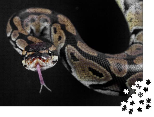 """Puzzle 1000 Teile """"Pythonschlange mit herausgestreckter Zunge"""""""