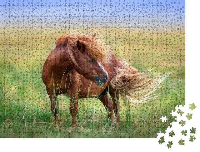 """Puzzle 1000 Teile """"Pony auf der Weide im Frühlingswind"""""""