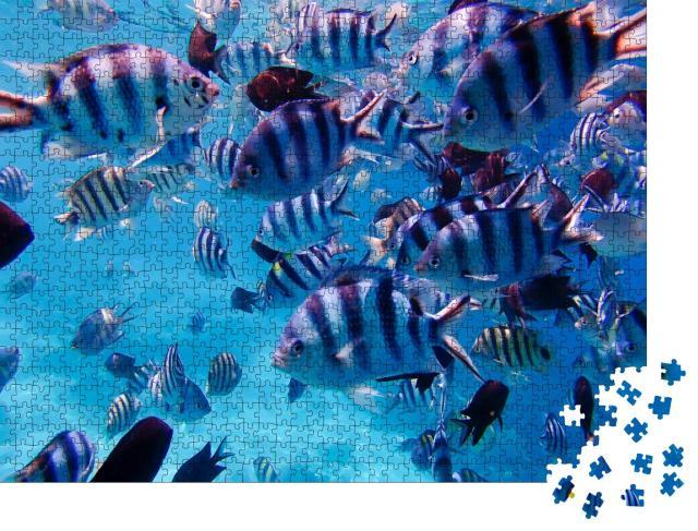 """Puzzle 1000 Teile """"Gruppe von bunten tropischen Fischen unter Wasser, Unterwasserwelt, Philippinen"""""""