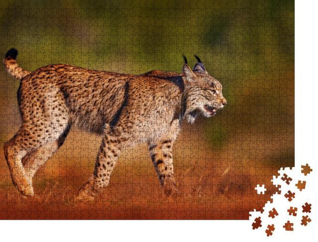 """Puzzle 1000 Teile """"Iberischer Luchs, Wildkatze auf der Iberischen Halbinsel"""""""