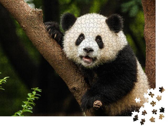 """Puzzle 1000 Teile """"Panda in seinem natürlichen Lebensraum"""""""
