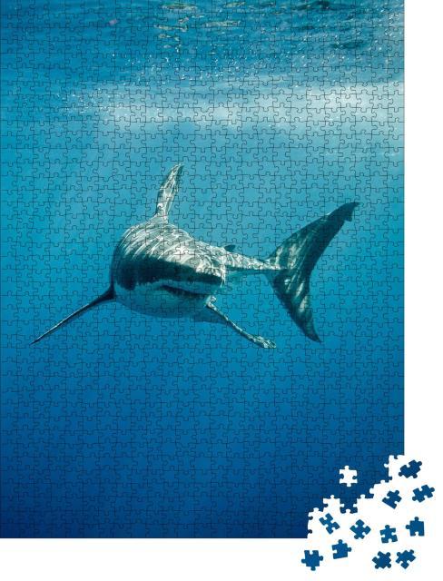 """Puzzle 1000 Teile """"Weißer Hai im blauen Ozean"""""""