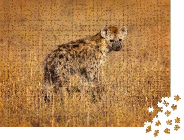 """Puzzle 1000 Teile """"Tüpfelhyäne, auch bekannt als lachende Hyäne, heimisch in Afrika"""""""