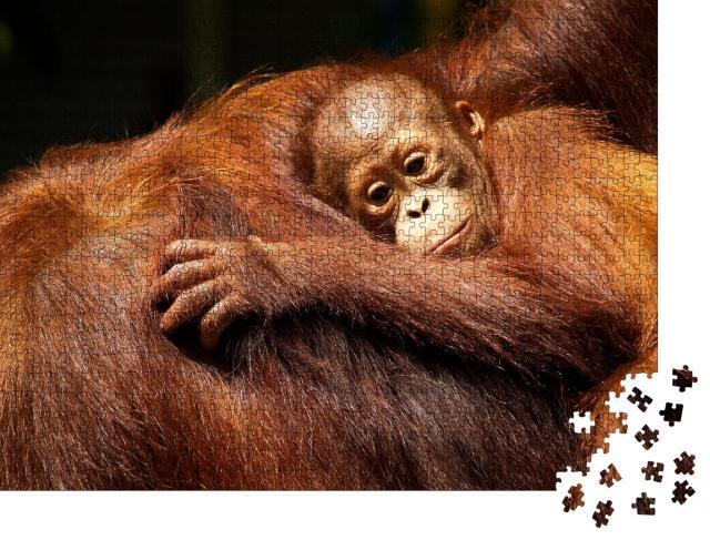 """Puzzle 1000 Teile """"Orang-Utan-Weibchen und ihr Baby im Regenwald"""""""
