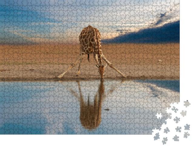 """Puzzle 1000 Teile """"Trinkende Giraffe am Wasserloch, Etosha-Pfanne, Namibia"""""""