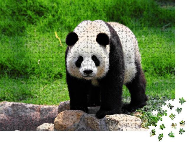 """Puzzle 1000 Teile """"Panda"""""""