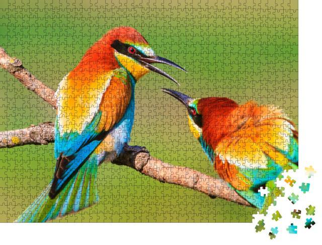 """Puzzle 1000 Teile """"Zwei wunderschön bunte Vögel auf einem Ast"""""""