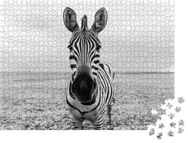 """Puzzle 1000 Teile """"Auge in Auge mit einem Zebra, schwarz-weiß"""""""