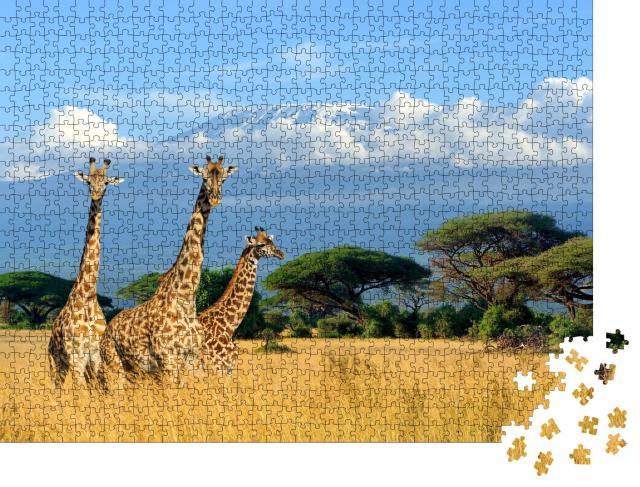 """Puzzle 1000 Teile """"Drei Giraffen im Nationalpark von Kenia"""""""