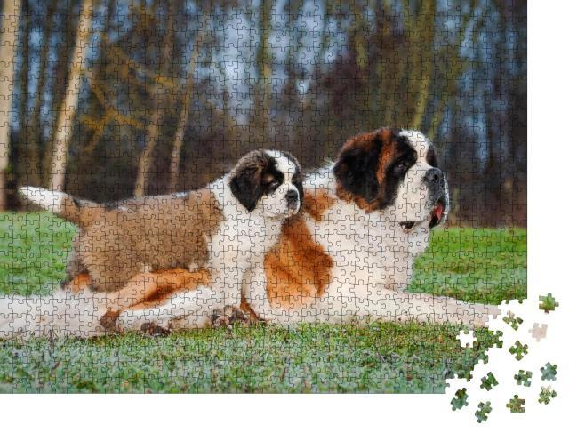 """Puzzle 1000 Teile """"Erwachsene und junge Bernhardinerhunde"""""""
