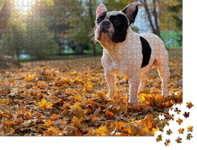 """Puzzle 1000 Teile """"Nette schwarz-weiße französische Bulldogge sitzt"""""""