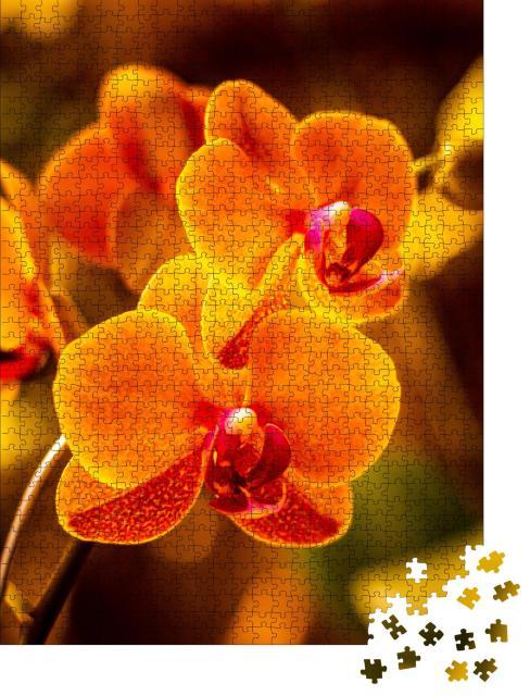 """Puzzle 1000 Teile """"Leuchtende Orchideenblüte in Orange"""""""