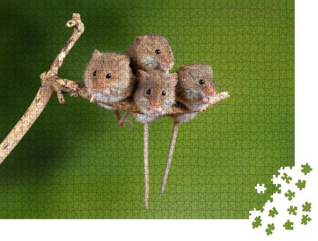 """Puzzle 1000 Teile """"Vier süße Mäuse auf einem winzigen Ast"""""""