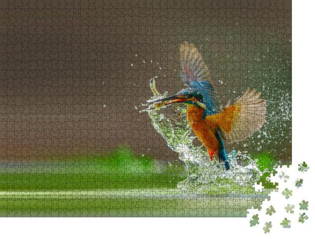 """Puzzle 1000 Teile """"Eisvogel fängt Fisch aus dem Wasser"""""""
