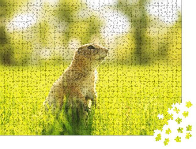 """Puzzle 1000 Teile """"Murmeltier auf einer sonnigen Wiese"""""""