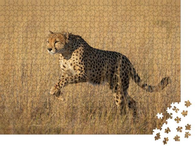 """Puzzle 1000 Teile """"Studie eines springenden Geparden in Savuti, Botswana"""""""