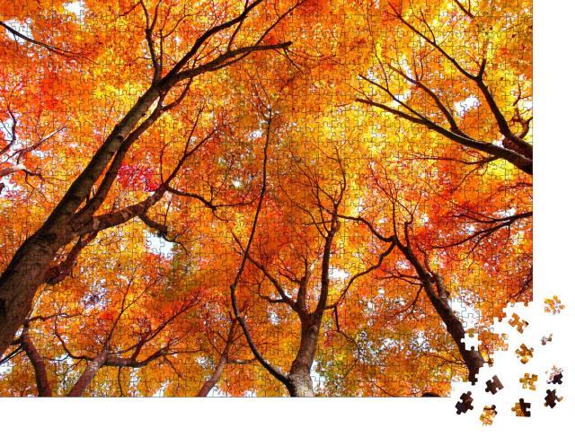 """Puzzle 1000 Teile """"Ahornbäume im Herbst"""""""