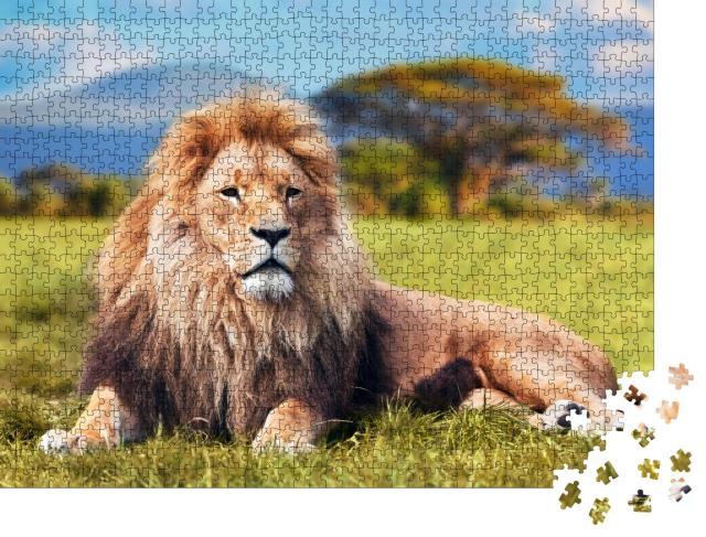 """Puzzle 1000 Teile """"Großer Löwe im Savannengras"""""""