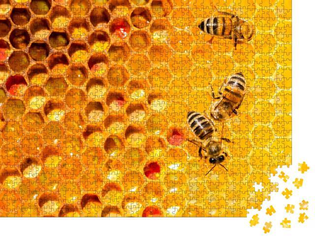 """Puzzle 1000 Teile """"Nahaufnahme von Bienen auf einer Wabe"""""""