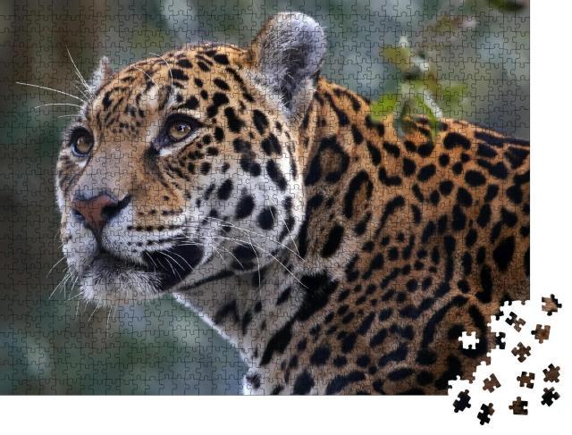 """Puzzle 1000 Teile """"Jaguar"""""""