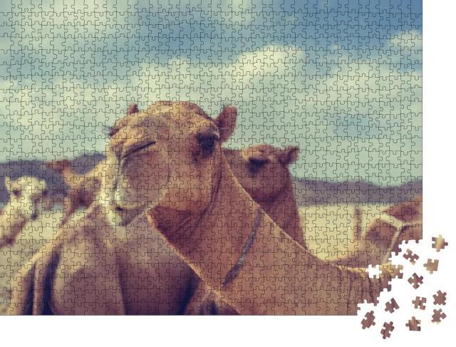 """Puzzle 1000 Teile """"Kamele in Saudi-Arabien"""""""