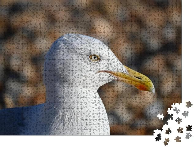 "Puzzle 1000 Teile ""Nahaufnahme einer Möwe"""