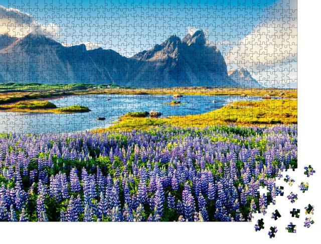 """Puzzle 1000 Teile """"Blühende Lupinen am Vestrahorn, isländische Küste"""""""
