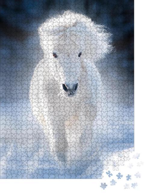 """Puzzle 1000 Teile """"Weißes flauschiges Shetlandpony im Galopp auf einer Winterwiese"""""""