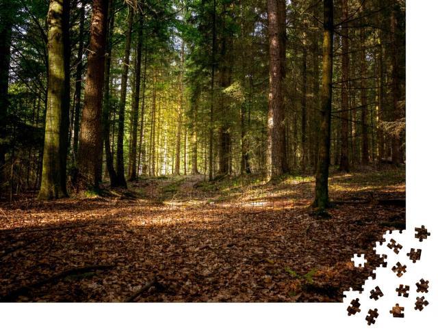 """Puzzle 1000 Teile """"Herbstsonne im bayerischen Wald, Deutschland"""""""