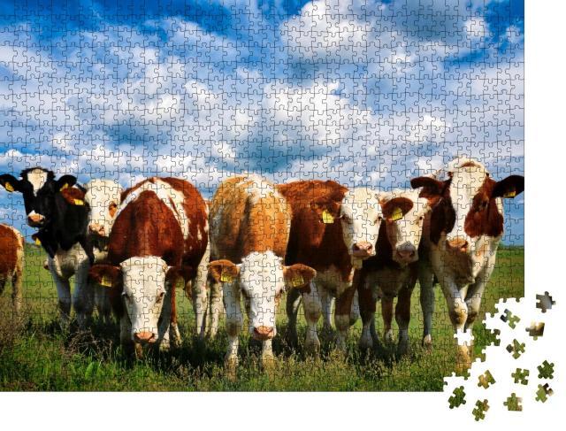 """Puzzle 1000 Teile """"Kühe auf einer grünen Sommerwiese"""""""