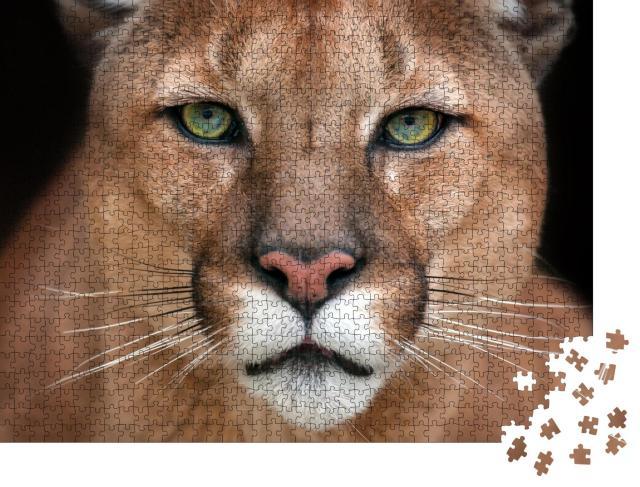 "Puzzle 1000 Teile ""Nahaufnahme: Im Blick eines Pumas"""