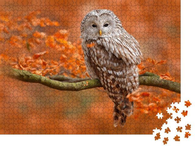 """Puzzle 1000 Teile """"Herbstaufnahme mit Eule, Uralkauz, sitzt auf Ast im Eichenwald, Norwegen"""""""