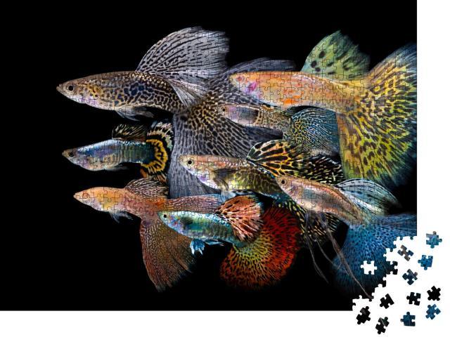 """Puzzle 1000 Teile """"Unterwasserwelt: Bunte Guppy Fische"""""""