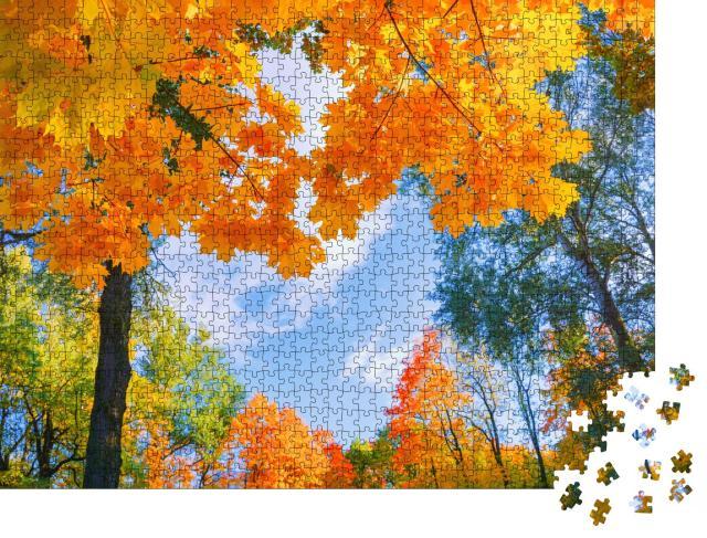 """Puzzle 1000 Teile """"Wunderschöne Landschaft: Goldenes Laub im Herbst"""""""