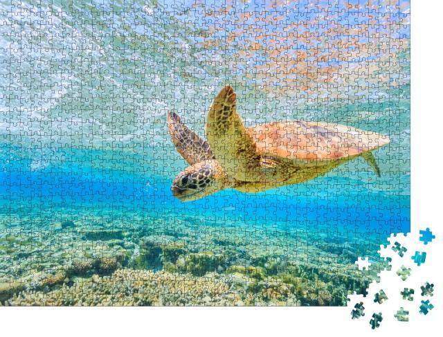 """Puzzle 1000 Teile """"Eine tauchende Schildkröte, Lagune auf Lady Elliot Island"""""""